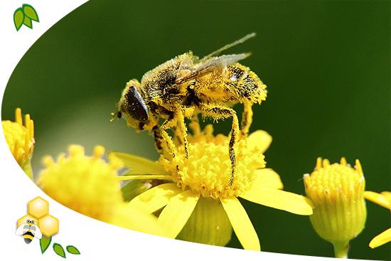 Apiterápia és a méhek nyújtotta 6 legismertebb méhtermék.