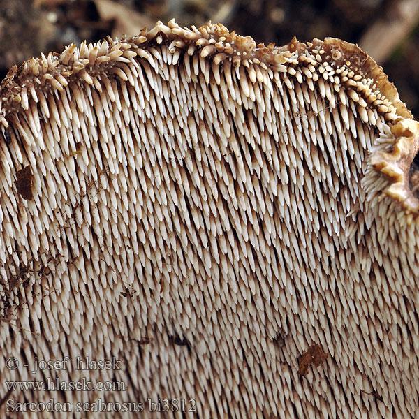 csodakenőcs méhviaszból és sárgája pikkelysömörből