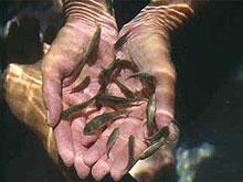 pikkelysömörrel halat kezelnek vörös foltok a talpon mi ez